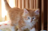 Джейми, 2 месяца